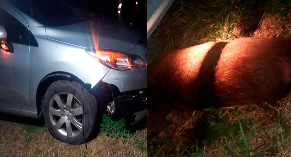 Ruta 226: Una familia de Bolívar impactó con su auto contra un carpincho