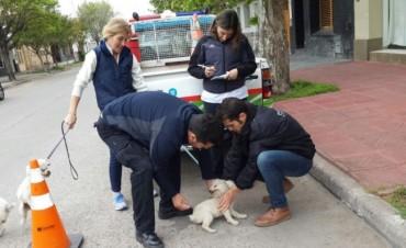 CAMPAÑA DE VACUNACIÓN ANTIRRÁBICA: Últimos días para vacunar perros y gatos