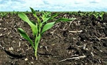 De los granos a los fertilizantes, la estrategia de las empresas del agro es reinventarse