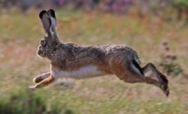 Multas de hasta $1,2 millones por la caza ilegal en la provincia de Buenos Aires