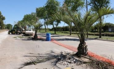 Avanzan los trabajos de ampliación sobre la avenida Cacique Coliqueo