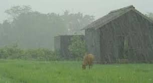 Se dieron registros de 4 a 12 milímetros y en algunas zonas no llovió
