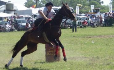 Hale: Muchos caballos en el predio de doma