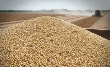 La soja se negoció en baja en la Bolsa de Rosario y cayó el volumen negociado