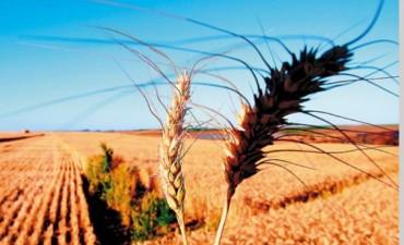 Bajas de hasta 3,8% para los commodities agrícolas y leve suba del crudo