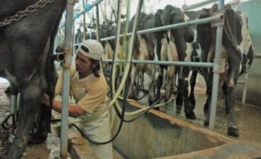 Ya hay más de 3.300 tambos en el nuevo sistema para la cadena láctea