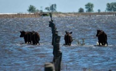 Multarán la construcción de canales clandestinos para la producción agropecuaria