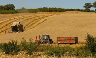 La cosecha de trigo está cerca de terminar en el Norte