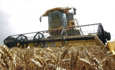 Ya se cosechó casi 20% del trigo
