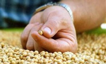 Una ley de semillas para el futuro