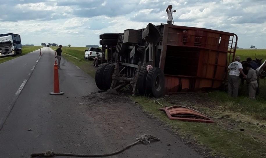 Ruta 226: un camionero volcó un acoplado y murieron 20 animales que transportaba