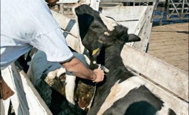 Fundebo anunció la vacunación de más de 240 mil animales en el partido de Bolívar