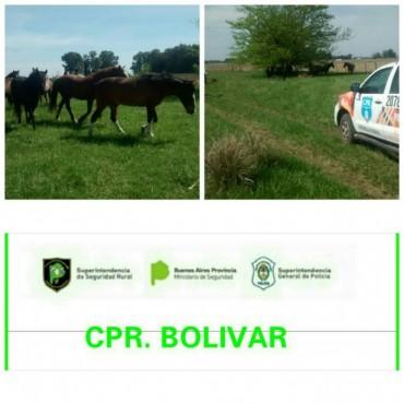 CPR: Infracción por 10 caballos sueltos en un camino rural