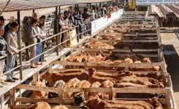 El Mercado de Hacienda de Liniers operó con 2082 vacunos
