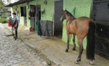 Alertan por un parásito que apareció en caballos en la Provincia
