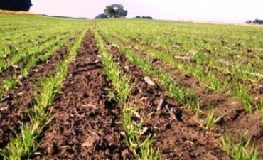 Aumentó más del 150% la participación del productor en la renta de exportación de trigo