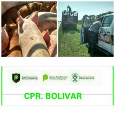 CPR: Incautan 62 animales de un camión sin documentación necesaria