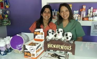 Se logró exitosamente la inseminación artificial de un Bulldog francés en Bolívar