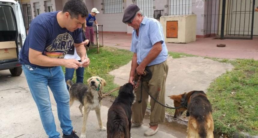 Continua la vacunación antirrábica para perros y gatos en los barrios de la ciudad