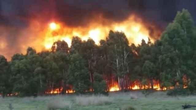 Bomberos de Rivera, Maza y Carhué colaboraron en un incendio de gran magnitud